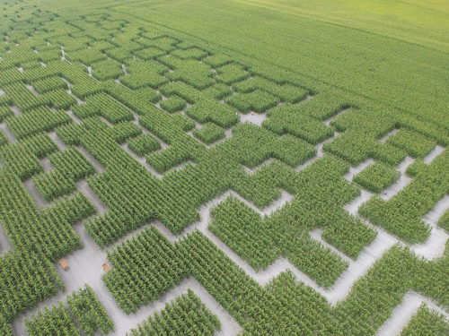 vue-ae´rienne--pop-corn-labyrinthe-web-min